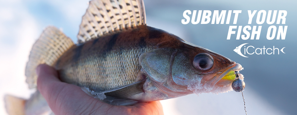 Submit Your Fish